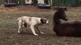 Dog and Horse Playing Around - Funny Animals Moment