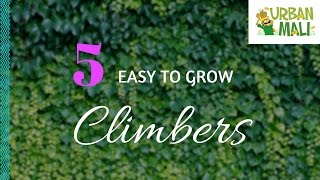 5 easy to grow climbers Climbers are a great way to cover walls, trellises, arches, pergolas, arbours, pillars, etc There are dense