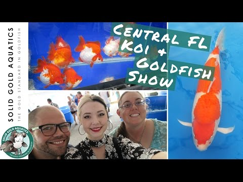 Did I Come Home with New Fish? // Central FL Koi Show 2017