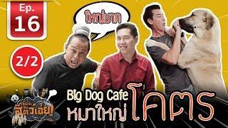 เพื่อนรักสัตว์เอ๊ย-คาเฟ่หมาใหญ่ใจดี-bigdogcafe-l-ep-16-l-2-2