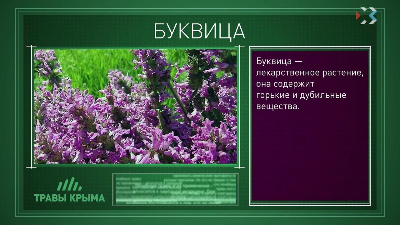 лекарственные травы крыма фото и описание поэтому