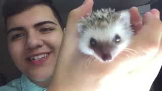 BUYING A HEDGEHOG WITHOUT MOM KNOWING