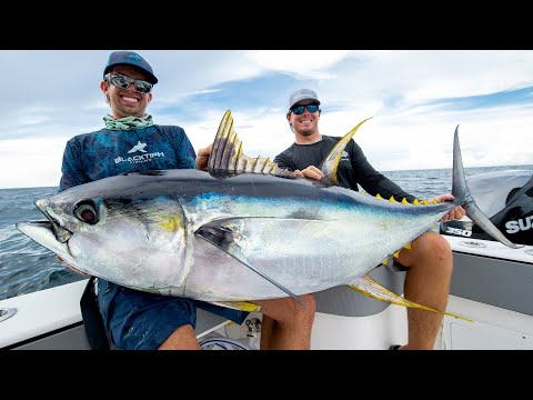 Monster Yellowfin Tuna!!