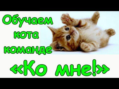 Вопрос: Как узнать, куда ходит гулять Ваш кот или кошка?