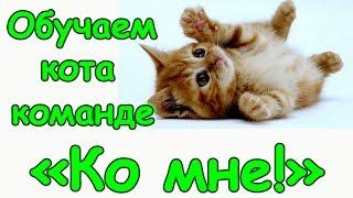 """Как обучить кота команде """"Ко мне!"""" и зачем это нужно. (07.17г.) Семья Бровченко."""