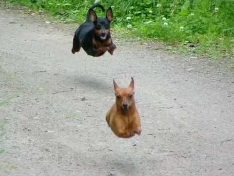 Animal Fail Compilation 2012 Cute Pix