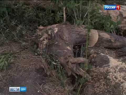 Жители Октябрьского района Ростова борются за сохранение рощи