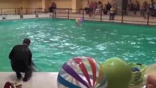 Киндер-Сити в Дельфинарии(, 2016-06-03T02:14:38.000Z)