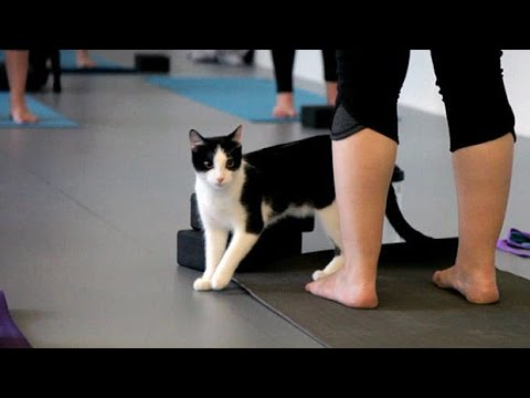 Yoga with cats raises money for orphaned kitties