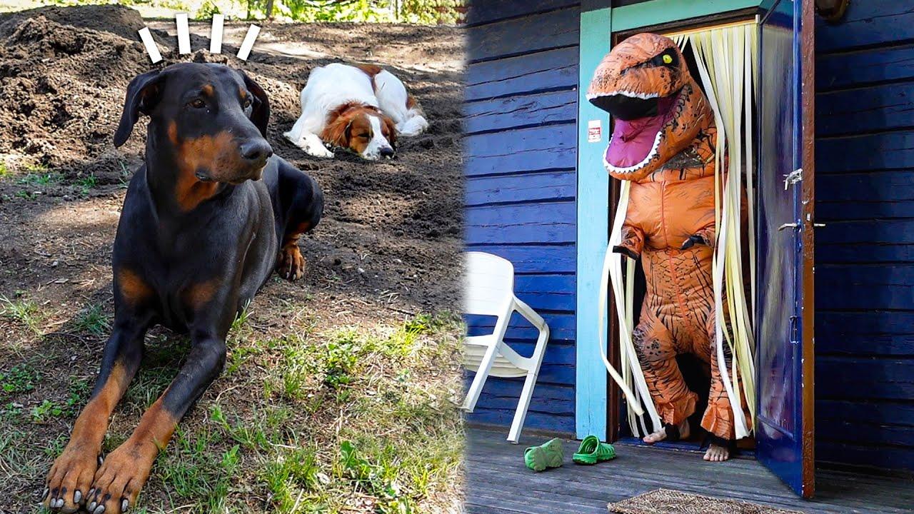 Koirat ei tykänny mun uudesta dinosaurus-asusta..