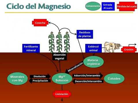 absorción de calcio y magnesio