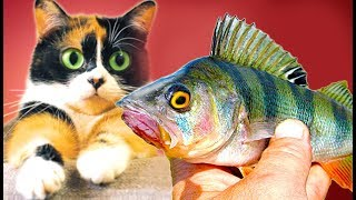Made Surviving Fishing Pole and Catch Fish for Cat!