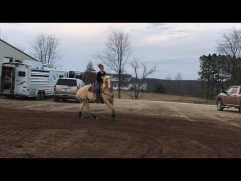 Twisted River Fuel - 4yo gelding for sale