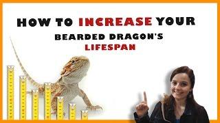 Bearded Dragon Lifespan - How To Increase Your Bearded Dragon