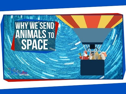 Why We Send Animals To Space