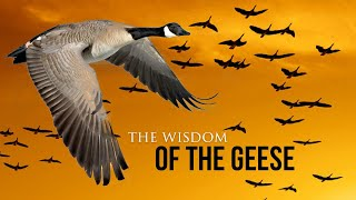 Wisdom Of The Geese - Best Motivational Video