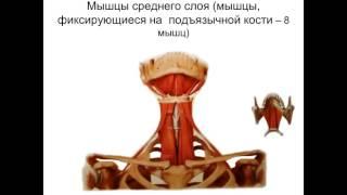 Мышцы и топография шеи 281114(, 2015-11-27T19:31:11.000Z)