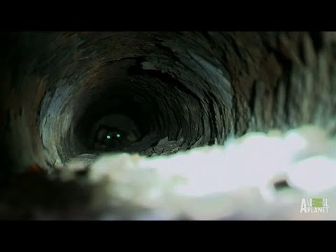 Dark Storm Pipe, No Place for Puppies | Pit Bulls and Parolees