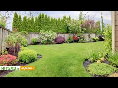 Советы по выбору газона ✿ правила и рекомендации ✿ уход за садом с HitsadTV