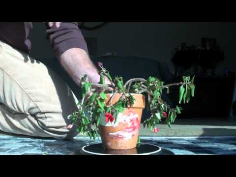 capillary action time lapse physics in nature