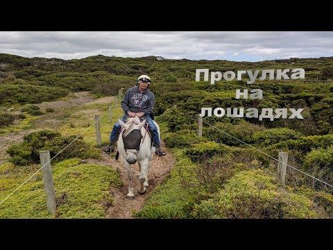 🐎Прогулка на лошадях.|The Horseback Riding.🐎