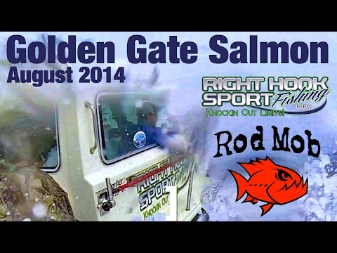Golden Gate Salmon With Right Hook Sport Fishing August 2014