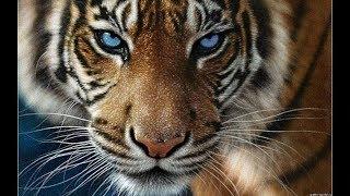 Вышивка крестом. DOME  - Тигр в сумерках. Отчет № 6.
