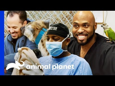 🔴 The Best Moments From Cy-Fair Animal Hospital | The Vet Life