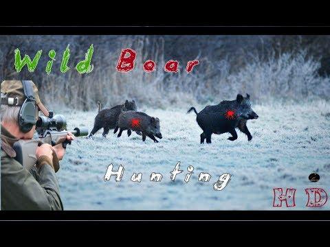 Wild Boar Hunting 2017 HD