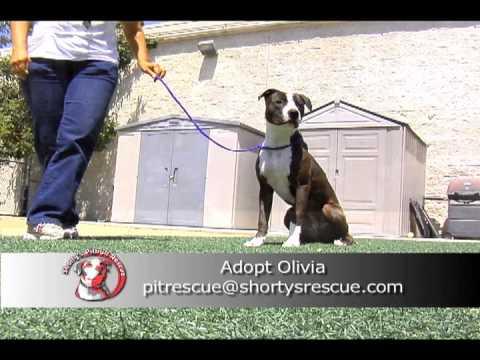 SPBR Olivia Petfinder Video