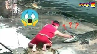 Bikin ngakak!Kelakuan lucu Manusia vs Hewan video lucu #10 2019 |HD