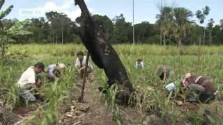 Regenwaldschutz und Arterhaltung in Guatemala | Global Ideas