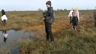 Bog shoeing in Leidissoo in Estonia
