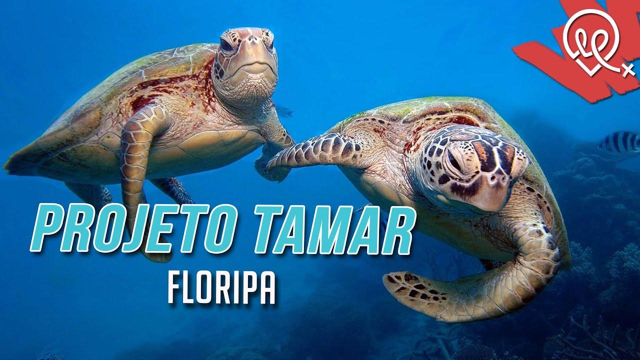 Projeto Tamar Florianópolis Youtube