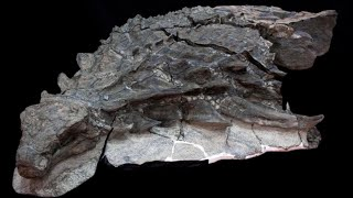 INCREDIBLE Fossil Discoveries of the 21st century