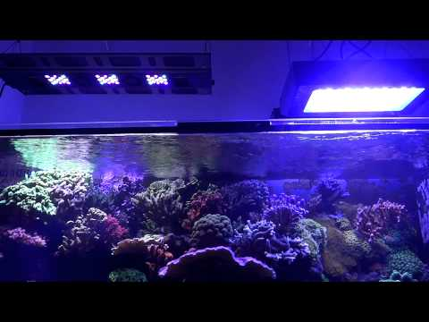 Pit´s Reef Tank - Light Update: Maxspect Razor & Chinese 120w Led Fixtures