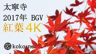 【大寧寺】紅葉 2017年 BGV 【4K】