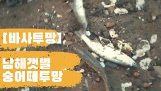 [바사투망]남해선소리 수문앞 갯벌 투망 바글바글 대박 숭어떼