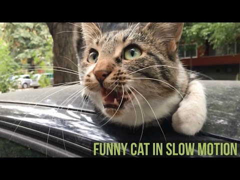 Funny cat in slow motion captured via iPhone using SloPro