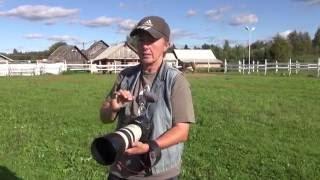 Как фотографировать лошадей красиво