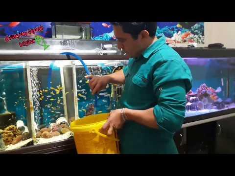 TETRA DIŞ FİLTRE TEMİZLİĞİ, AKVARYUM TEMİZLİĞİ, Akvaryum Balıkları, External Filter Cleaning
