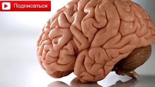 Необычные факты о нашем теле - Мозг