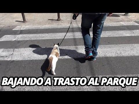 Gato paseando con correa: Trasto va al parque Edition