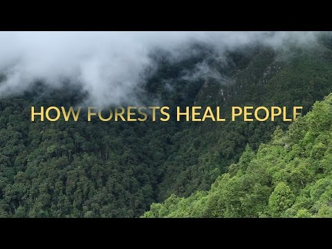 How Forests Heal People | Short Nature Documentary