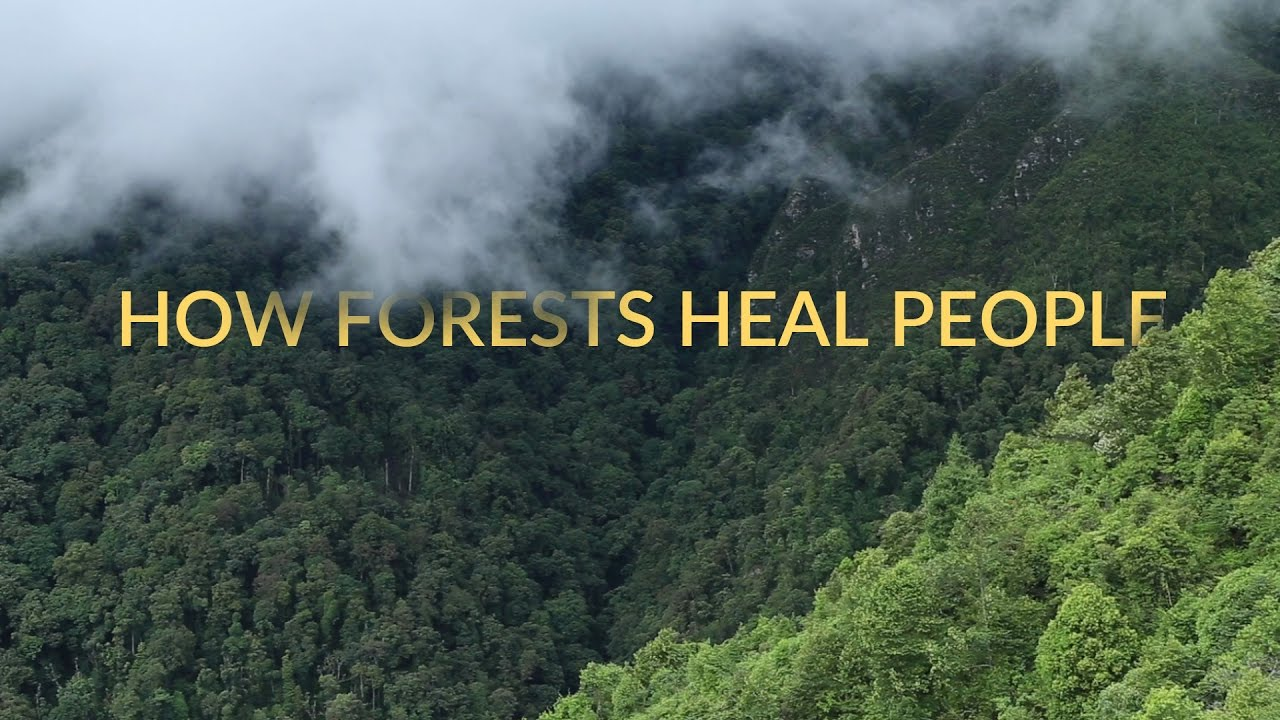 How Forests Heal People