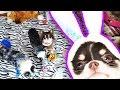 Игровая комната питомцев РУМ ТУР Комната щенка, собаки играют Magic Family