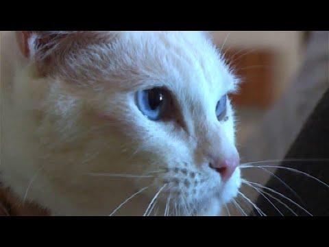 Achilles: Taube Katze, offizielles WM-Orakel