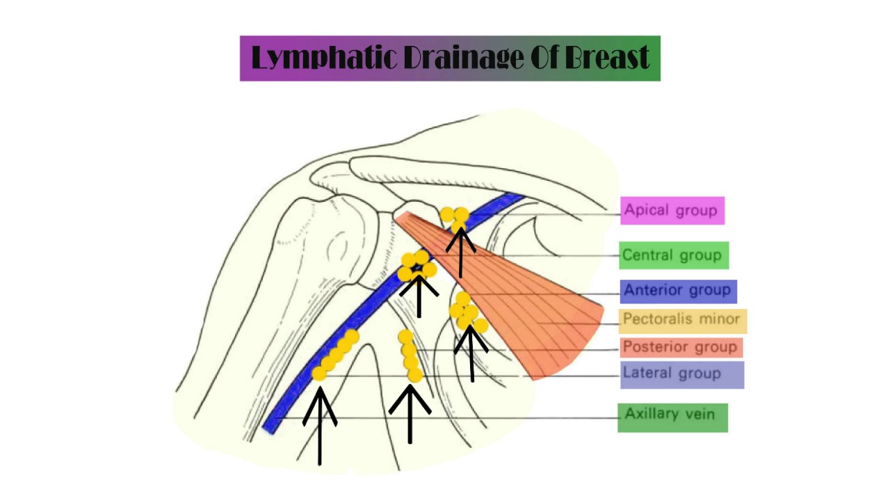 of Lymph breast drainage