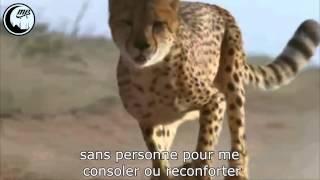 ᴴᴰ Syrie - Anasheed (Sous-titre français)