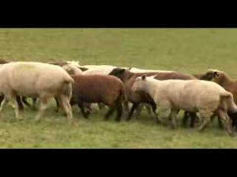 Les Pages Jaunes - Moutons